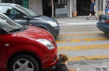 Κλήση και στο σκύλο;