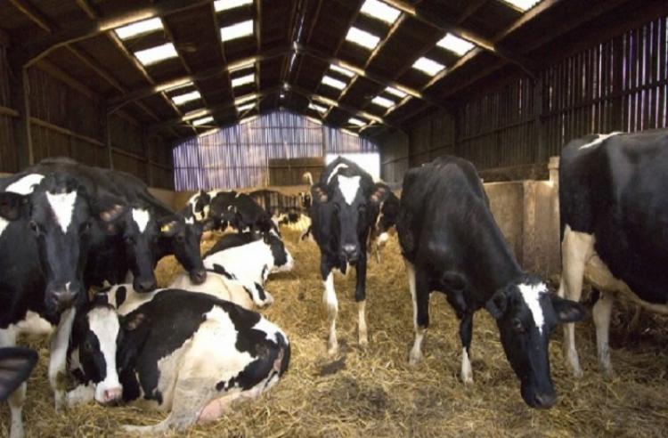 Αλλάζει το μοντέλο αδειοδότησης των κτηνοτροφικών εγκαταστάσεων