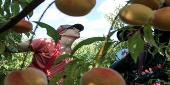 Τέλος οι ενισχύσεις από την Ε.Ε. στους αγρότες για το ρωσικό εμπάργκο!