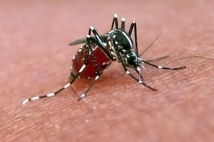Ψεκασμός σήμερα στην Τ.Κ. Κεφαλοχωρίου για την καταπολέμηση των ακμαίων κουνουπιών