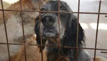 Ημέρα Υιοθεσίας Αδέσποτων Σκύλων