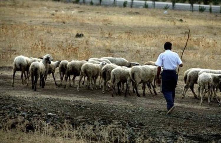 Αγρότες και κτηνοτρόφοι χάνουν την εξισωτική αποζημίωση λόγω της επαναχάραξης των μειονεκτικών και ορεινών περιοχών