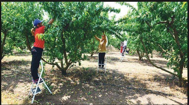 Σε Ημαθία, Πέλλα και Ηλεία οι περισσότεροι εποχικοί εργαζόμενοι στον αγροτικό τομέα