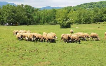 Εντάσσονται 690 κτηνοτρόφοι στο πρόγραμμα Διατήρησης Αυτόχθονων Φυλών με συνολικό προϋπολογισμό 34 εκατ. ευρώ
