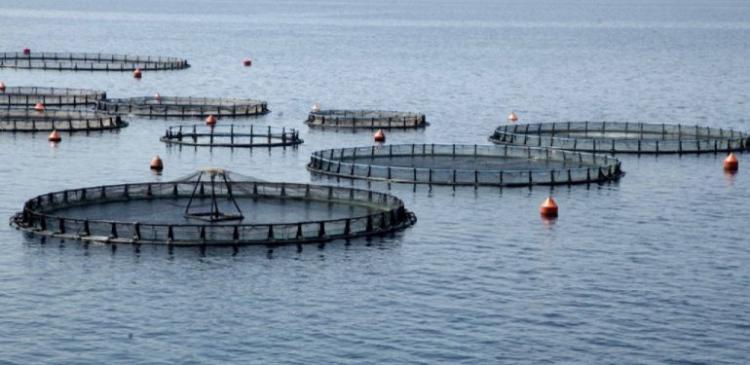 Έγκριση 112 επενδύσεων στις υδατοκαλλιέργειες, που θα δημιουργήσουν 164 νέες θέσεις εργασίας