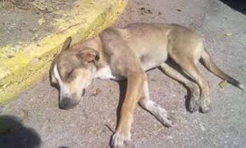 Μηνυτήρια αναφορά κατέθεσε στον Εισαγγελέα ο Δήμος Βέροιας για τις θανατώσεις αδέσποτων ζώων
