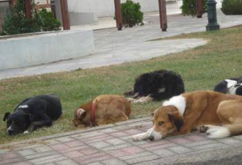 Φιλοζωικός Όμιλος Ημαθίας : «Μπάτε σκύλοι, αλέστε…»