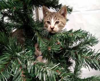 Μια...φιλοζωική πρόταση για στολισμό του χριστουγεννιάτικου δένδρου!