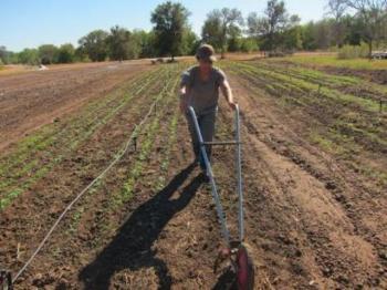Εξυγίανση του Μητρώου Αγροτικών Συνεταιριστικών Οργανώσεων