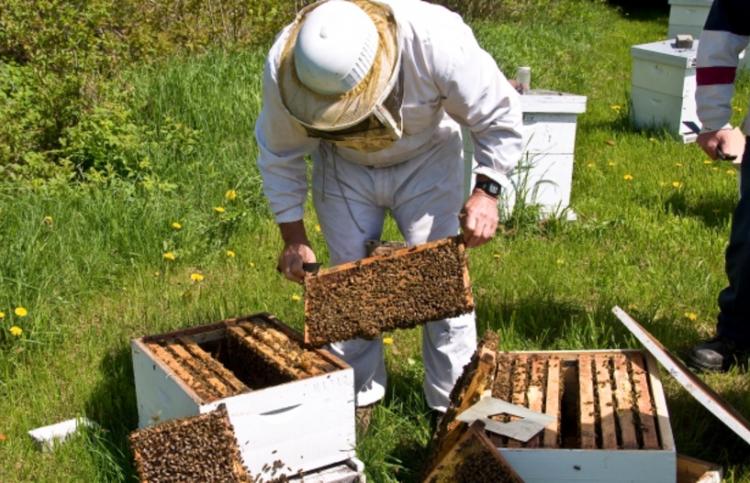 Π.Ε. Ημαθίας : Μέχρι τις 21/01/2019 οι αιτήσεις για αντικατάσταση κυψελών και στήριξης της νομαδικής μελισσοκομίας