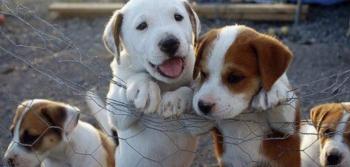 Χρηματοδότηση των δήμων Βέροιας και Αλεξάνδρειας για τα αδέσποτα ζώα συντροφιάς