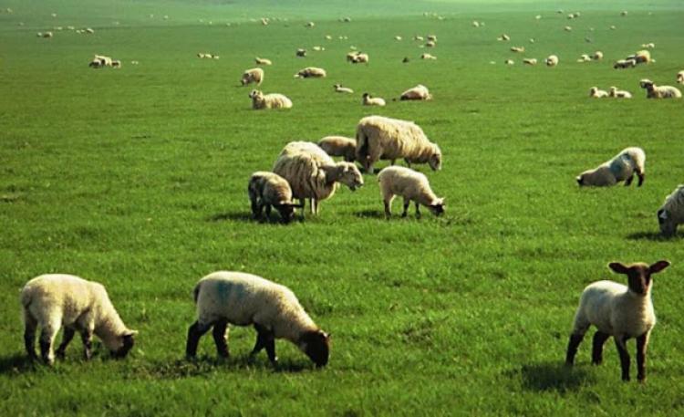 Παράταση προθεσμίας υποβολής αιτημάτων χωροταξικής ανακατανομής βοσκοτόπων