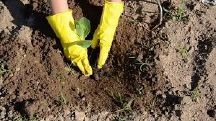 Έναρξη υποβολής αιτήσεων στο Υπομέτρο 6.3 «Ανάπτυξη μικρών γεωργικών εκμεταλλεύσεων» του ΠΑΑ 2014-2020