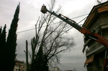 Κλαδεύτηκε πανύψηλο δέντρο για λόγους ασφαλείας!