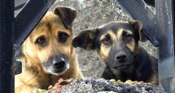 Χρηματοδότηση από 50% - 70% σε Δήμους για τη διαχείριση των αδέσποτων ζώων συντροφιάς