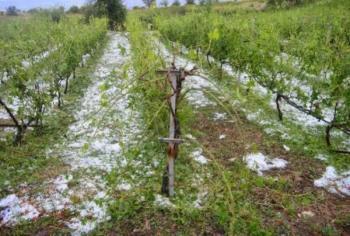 Ανακοινώθηκαν τα πορίσματα εκτίμησης ζημιών από το χαλάζι της 24-05-18 σε καλλιέργειες παραγωγών της ΤΚ Καβασίλων