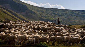 Την Κυριακή οι εκλογές της Πανελλήνιας Ένωσης Κτηνοτρόφων