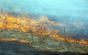 Εκδήλωση πυρκαγιών σε αγροτικές εκτάσεις και τάφρους στον Δήμο Αλεξάνδρειας