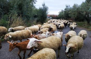 Υπουργική απόφαση για την αναγνώριση περιπτώσεων ανωτέρας βίας, ώστε να αποφευχθεί η απώλεια επιδοτήσεων κτηνοτρόφων