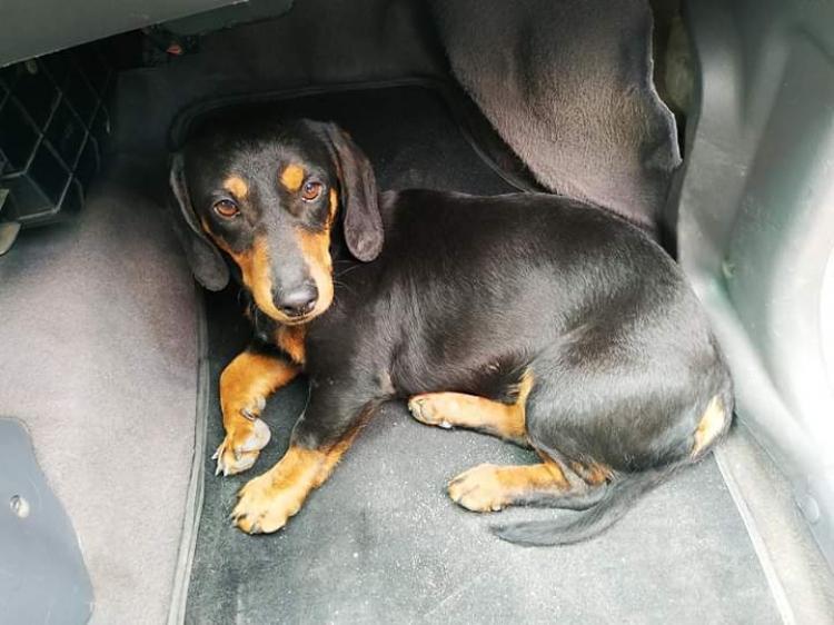 Χάθηκε σκυλάκι στην περιοχή Ασωμάτων Βέροιας