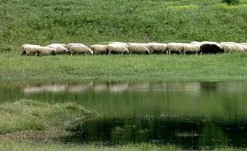 Στοχευμένη προκήρυξη για τη Βιολογική Κτηνοτροφία  -Αιτήσεις έως τις 22 Απριλίου 2019