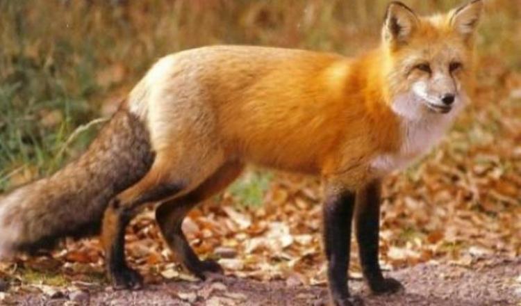Π.Ε. Ημαθίας : Εναέρια ρίψη – διανομή εμβολίων – δολωμάτων κατά της λύσσας