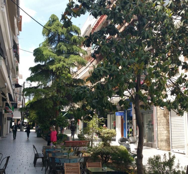 Διευκρινήσεις του Δήμου Βέροιας για τα παρτέρια στην οδό Ιπποκράτους