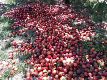 Αγροτικός Σύλλογος Ημαθίας : «O κ. Αραχωβίτης ήρθε, είδε και απήλθε»