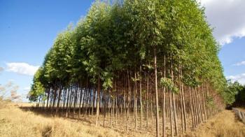 Τροποποίηση του καθεστώτος κυρώσεων για τους δικαιούχους του Μέτρου 221 «Πρώτη Δάσωση γεωργικών γαιών»