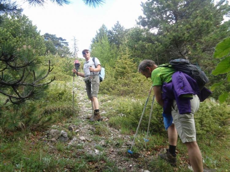 ΒΕΡΜΙΟ - ΞΗΡΟΛΙΒΑΔΟ, Κορυφή  Ξηροβούνι 1805μ., Κυριακή 2 Ιουνίου 2019, με τους Ορειβάτες Βέροιας