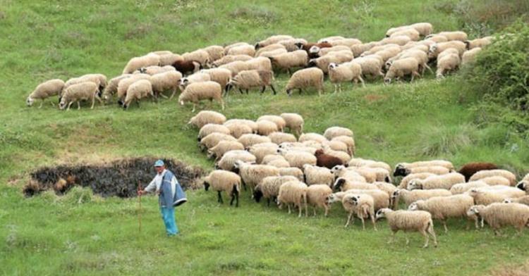 Εξισωτική του 2013 και 2014: Μετά από απόφαση του Δικαστηρίου της Ε.Ε. πιο κοντά στη λύση για τους κτηνοτρόφους της χώρας μας