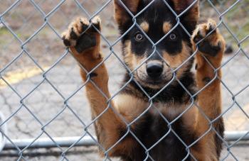 Καθορίστηκαν οι όροι και οι προϋποθέσεις χρηματοδότησης των δημ. καταφυγίων, με στόχο τη διασφάλιση της φροντίδας των αδέσποτων ζώων