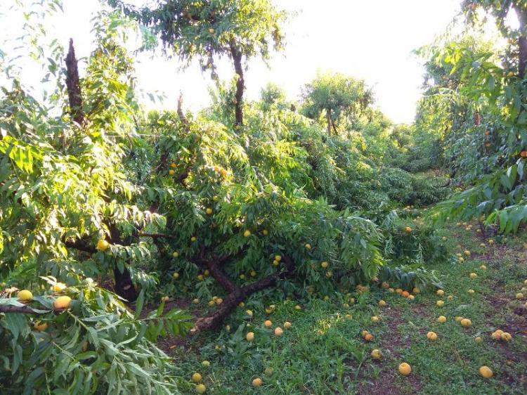 Αναγγελία ζημιάς από χαλαζόπτωση-ανεμοθύελλα-βροχόπτωση