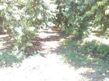 Ανταποκριτές ΕΛΓΑ Δήμου Βέροιας : «Να αφήσουν «μάρτυρες» οι αγρότες για τη θεομηνία της 10 Ιουλίου»