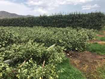 Άμεση η κινητοποίηση για την καταγραφή των ζημιών σε καλλιέργειες από τα ακραία καιρικά φαινόμενα