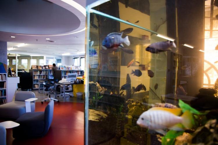 Ρεκόρ δανεισμών στη Δημόσια Βιβλιοθήκη της Βέροιας