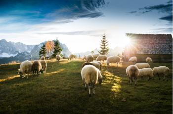Πίστωση ενισχύσεων σε δικαιούχους για βιολογικές δράσεις ζωικής παραγωγής