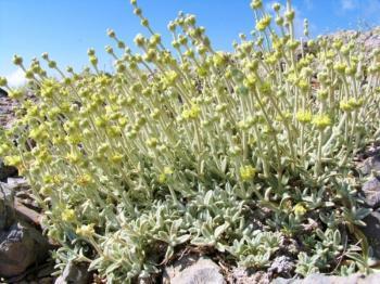 Το Βέρμιο των θεραπευτικών φυτών!
