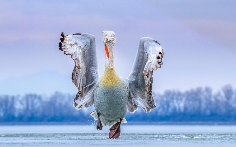 1ο βραβείο στην ΠΚΜ στη φετινή συμμετοχή της στην έκθεση εναλλακτικού τουρισμού «Birdfair» στη Μεγάλη Βρετανία