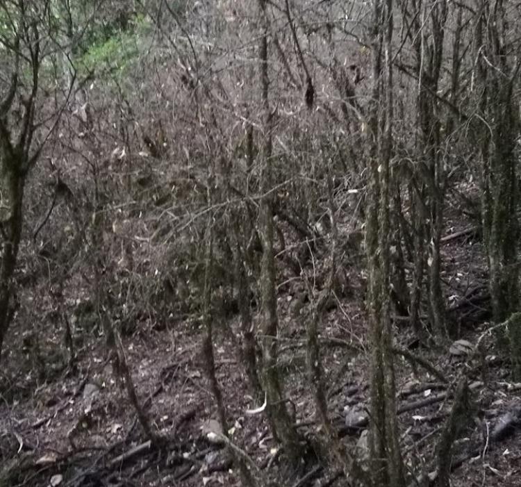 Εικόνες καταστροφής στο Βέρμιο!