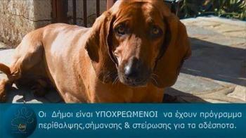 Φίλοι των ζώων της Νάουσας : «Στον τομέα μας η δημοτική αρχή αφήνει πίσω της...συντρίμμια»!