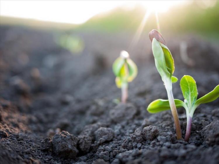 70 εκατομμύρια ευρώ για 5.000 μικροκαλλιεργητές σε ολόκληρη τη χώρα