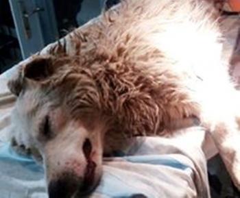 Σκυλί πυροβολημένο στη Βέροια