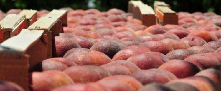 Παράταση μέχρι τέλη Ιουνίου 2018 των μέτρων στήριξης στα φρούτα λόγω ρωσικού εμπάργκο