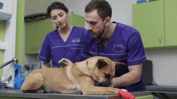 Δήμος Βέροιας : Ολοκληρώθηκε επιτυχώς το πρόγραμμα εθελοντικών στειρώσεων αδέσποτων ζώων συντροφιάς