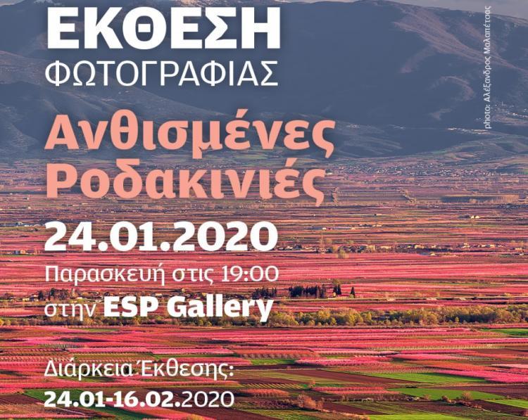Οι Ανθισμένες Ροδακινιές της Βέροιας ταξιδεύουν στη Θεσσαλονίκη