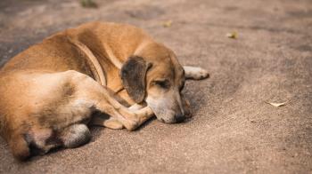 Σε μήνυση κατά αγνώστων προχωρά ο Δήμος Νάουσας για περιστατικά θανάτωσης αδέσποτων ζώων
