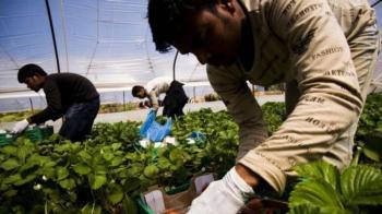 Έρχεται αγροτικός...ΟΑΕΔ για μετανάστες σε όλη τη χώρα! Η πιλοτική του εφαρμογή ξεκινά από την Ημαθία