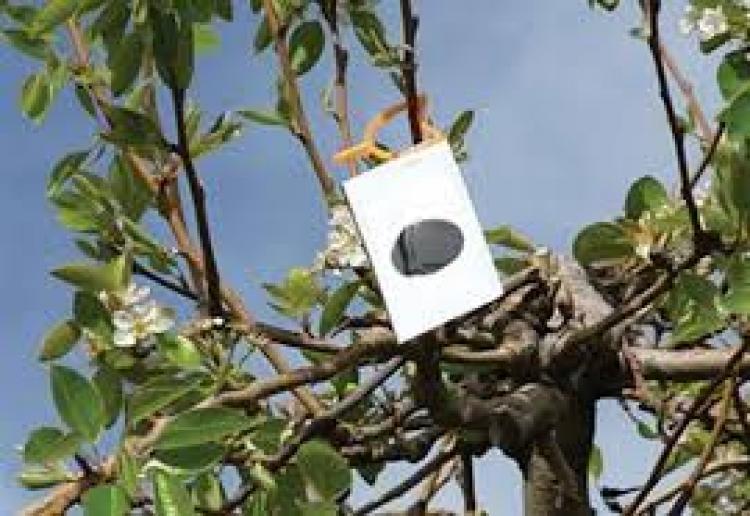 ΚΟΜΦΟΥΖΙΟ : Πίνακες με μη επιτρεπόμενα χημικά εντομοκτόνα & με φερομονικά σκευάσματα, έτος 2020