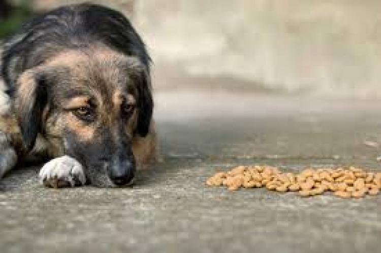 Ο Δήμος Βέροιας έχει προβεί σε όλες τις απαραίτητες ενέργειες για τη σίτιση των αδέσποτων ζώων συντροφιάς της περιοχής μας